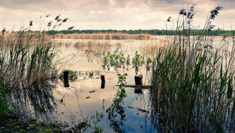 Rezerwat Łynżczok