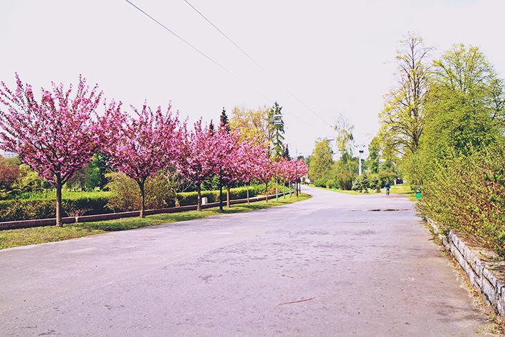Park Ślonski / fot. Iwona Łach